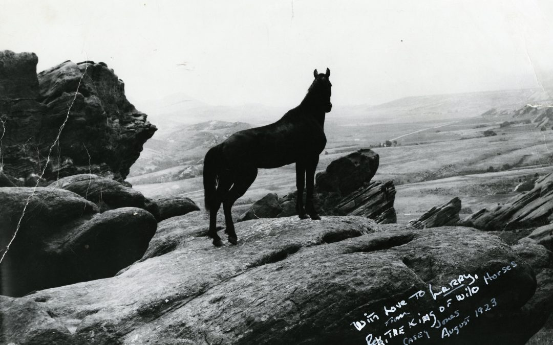 Rex the Wonder Horse