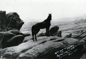 Rex, King of the Wild Horses